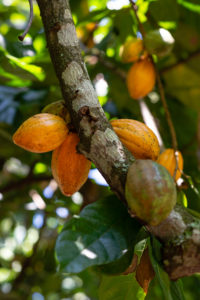 perufruits