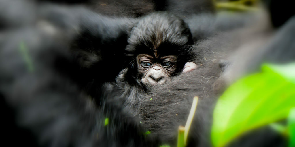 Animals of Virunga National Park